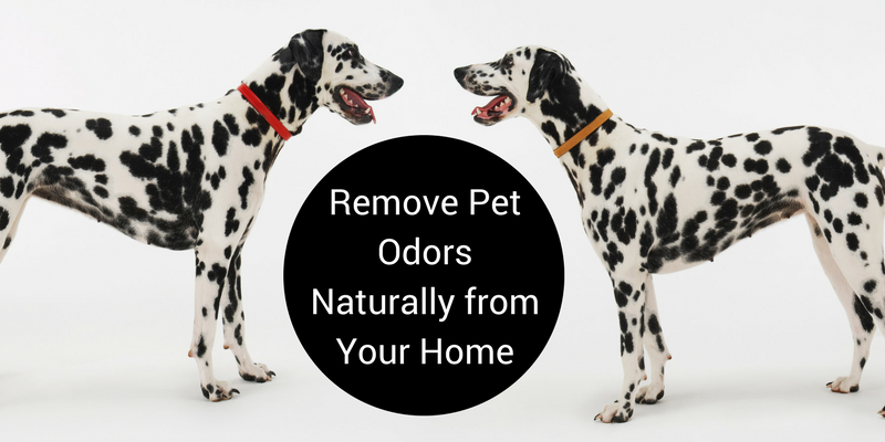 Remove Pet Odors Naturally from Your Home