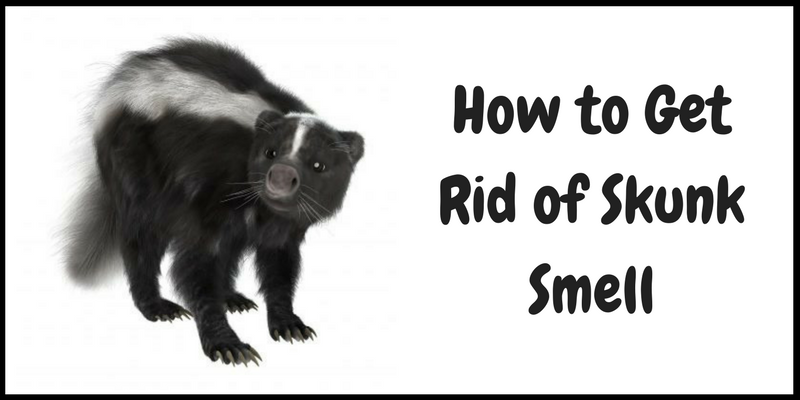 How do you get rid of skunks in your backyard 28 images How to get rid of shower smell