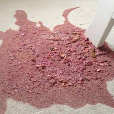 How do you clean vomit from carpet meze blog for How to clean vomit from floor