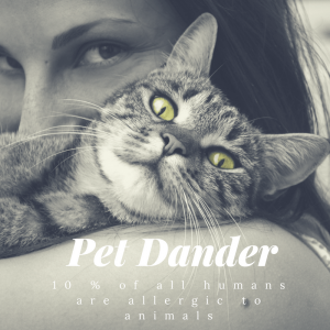 dealing with pet allergies