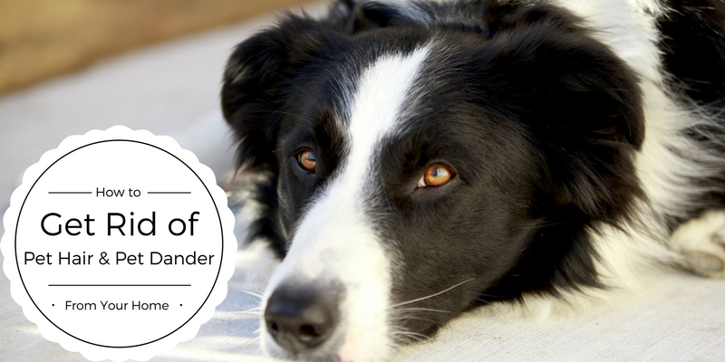 How to Get Rid of Pet Hair & Pet Dander From Your Home