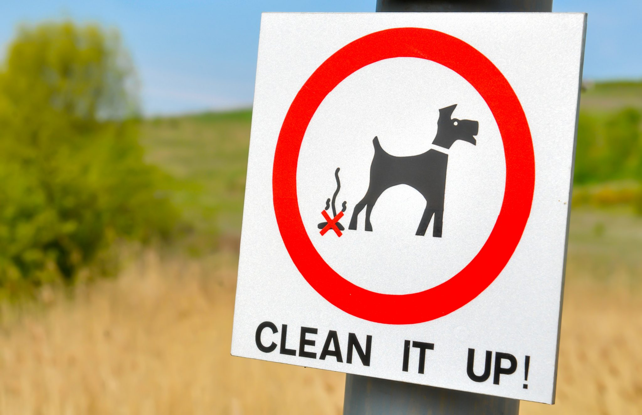 The Ultimate Pet Odor Removal Tips For All Pet Owners
