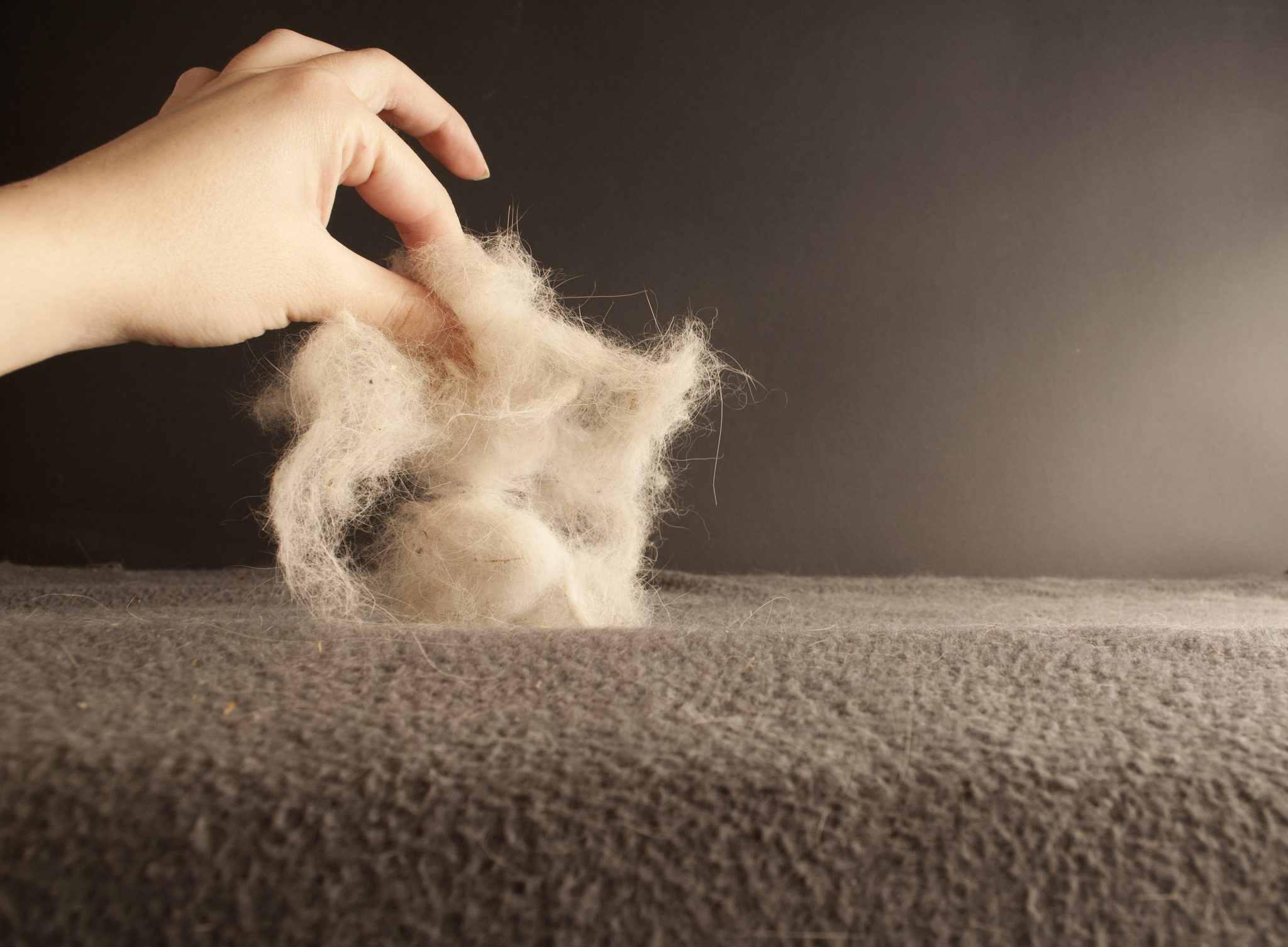 Tired Of Pet Hair Get Help To Control Pet Dander In Your