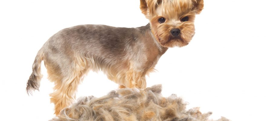 Tired Of Pet Hair Get Help To Control Pet Dander In Your Home