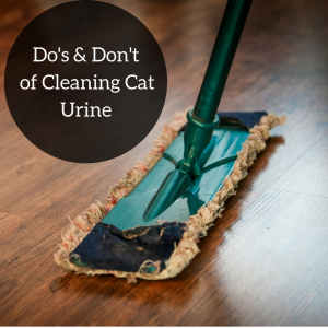 Steer Clear of these Products for Cat Urine Removal