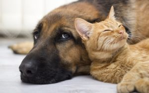 Do Dogs Smell Worse Than Cats?