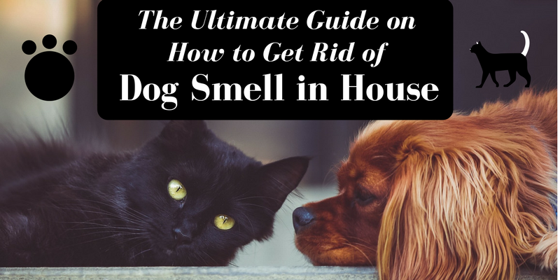 The Ultimate Guide on How to Get Rid of Dog Smell in House