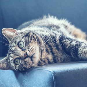 The Ultimate Guide on How to Get Rid of Cat Urine Smell