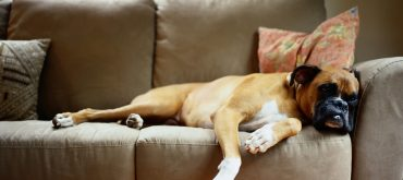 get rid of dog smell in house