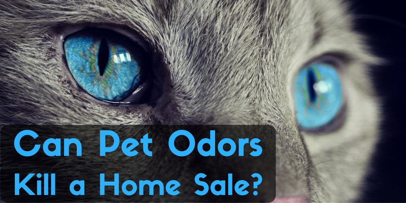 Can Pet Odors Kill a Home Sale?