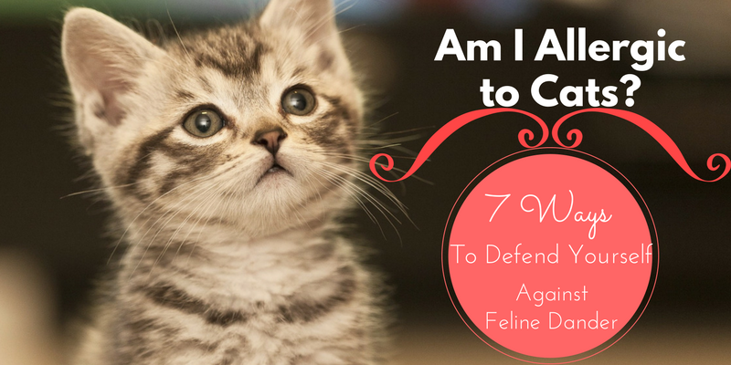 Am I Allergic to Cats? 7 Ways to Defend Yourself Against Feline Dander