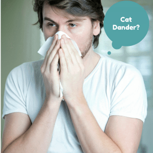 Is Your Cats Dander Impacting Your Health