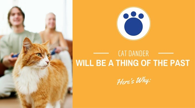Cat Dander Removal Tips- How to Make Pet Dander A Thing of the Past