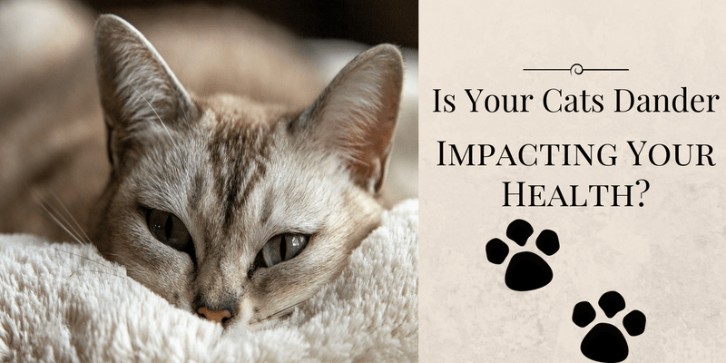 Is Cat Dander Impacting Your Health?
