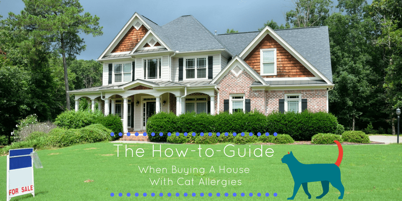 The How-to Guide When Buying a House With Cat Allergies