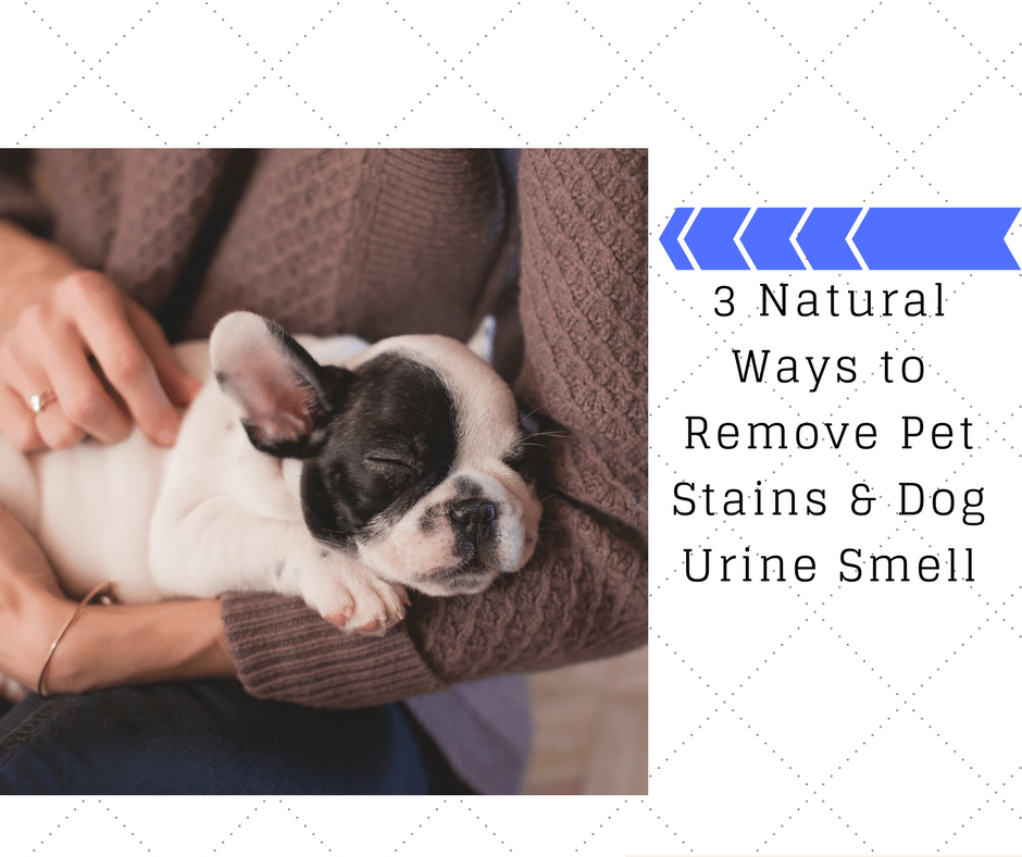 3 Natural Ways to Remove Pet Stains & Dog Urine Smell