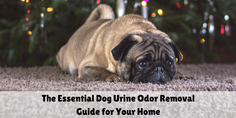 The Essential Dog Urine Odor Removal Guide for Your Home