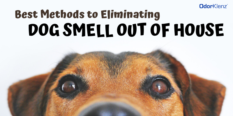 Best Methods to Eliminating Dog Smell Out of House