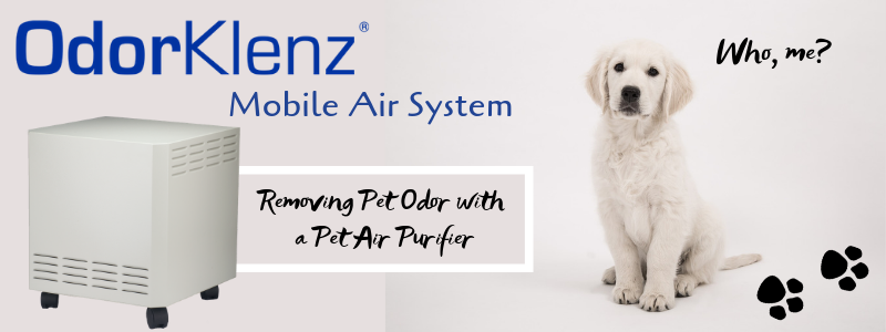 Removing Pet Odor with a Pet Air Purifier