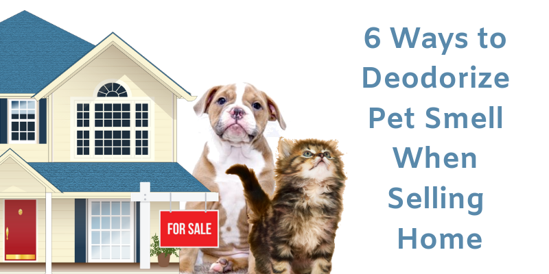 6 Ways to Deodorize Pet Smell When Selling Home