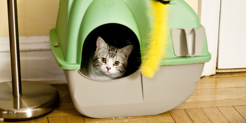 6 Methods to Reduce Litter Box Smell in a Home