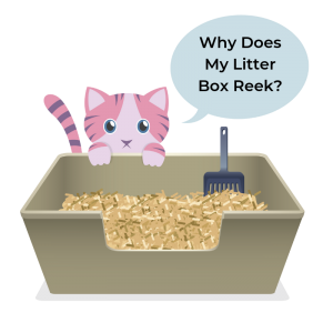 Why Does My Cat Litter Box Smell So Bad