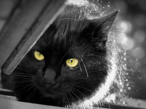 How to Treat Cat Dandruff & Dander